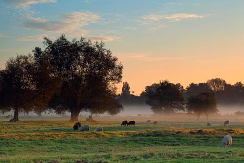 Early morning Harnham water meadows