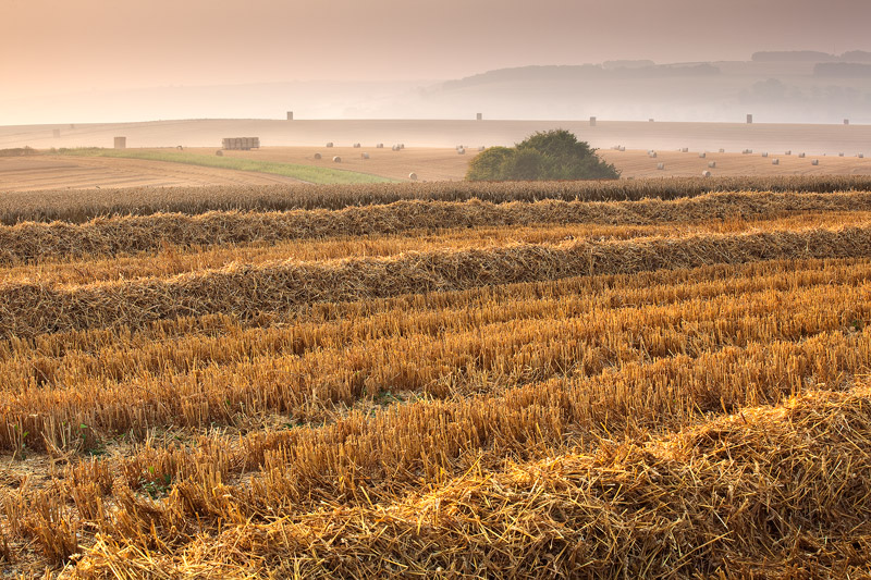 Early Morning during Harvest