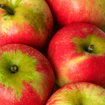 English Apples square