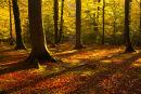 Evening sunlight Bramshaw Woods