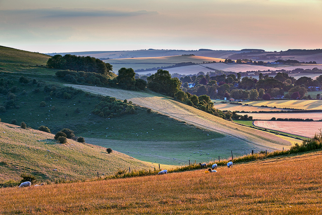 Summer Evening Knowle Hill
