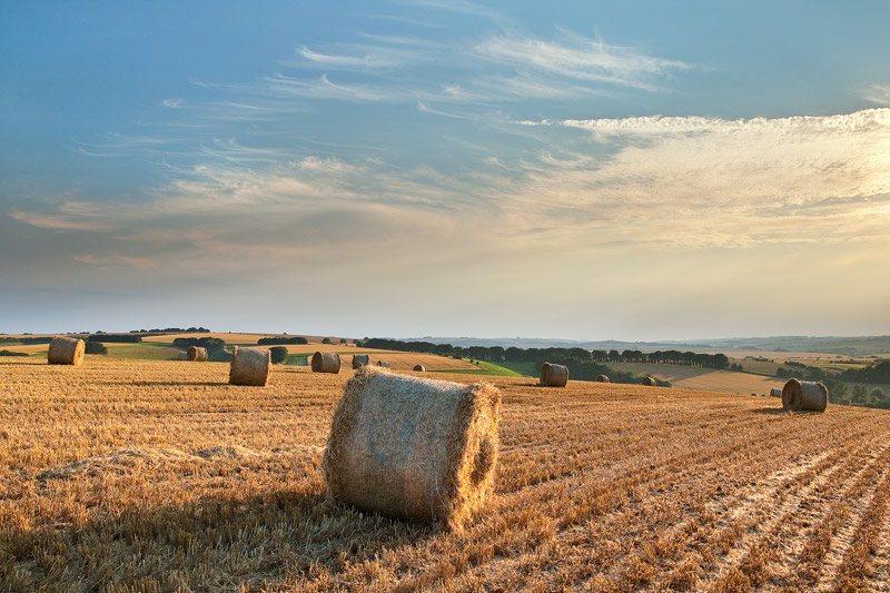 Harvest Knighton Hill