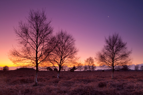 Ibsley Common Sunset