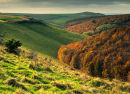 Melbury Down in Autumn