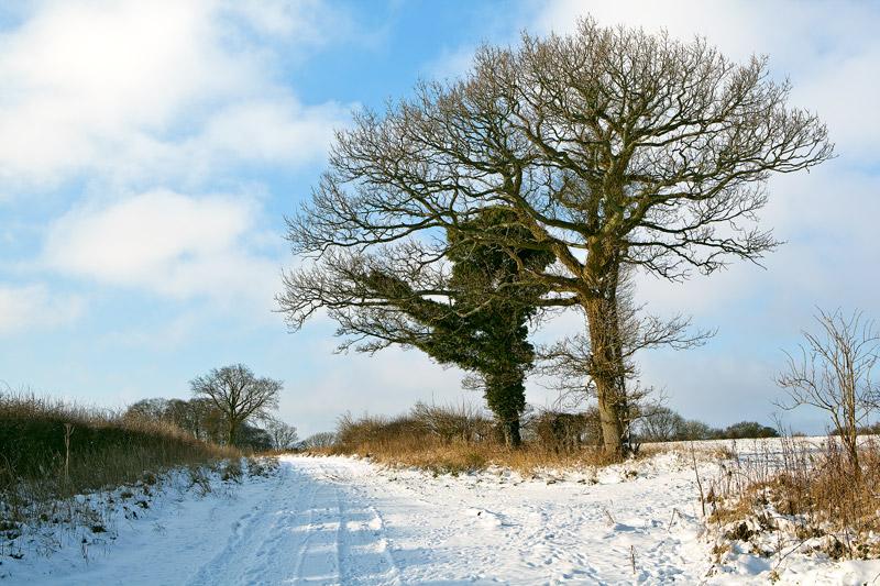 Snow On the Ox-Drove