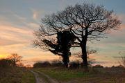 Ox-Drove Sunset