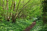 Roman Road in Spring
