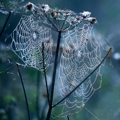 Seedhead and Spiderweb