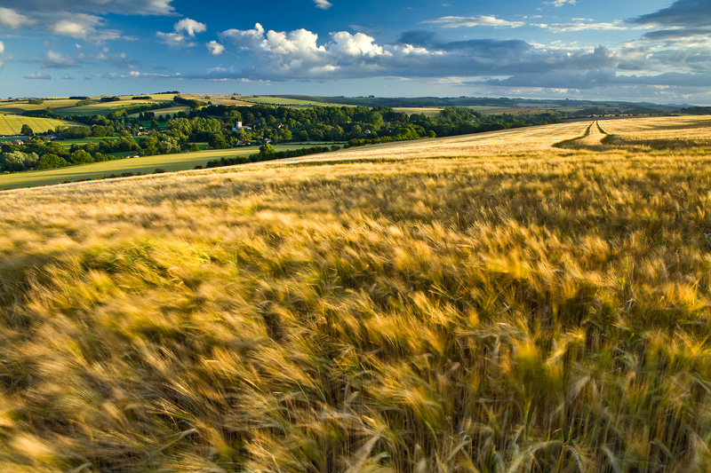 Wind and Barley Broad Chalke