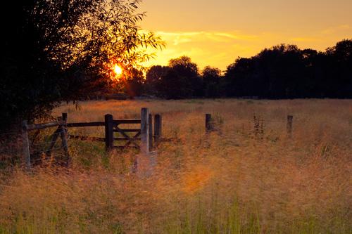 Summer sunset Harnham Water Meadows
