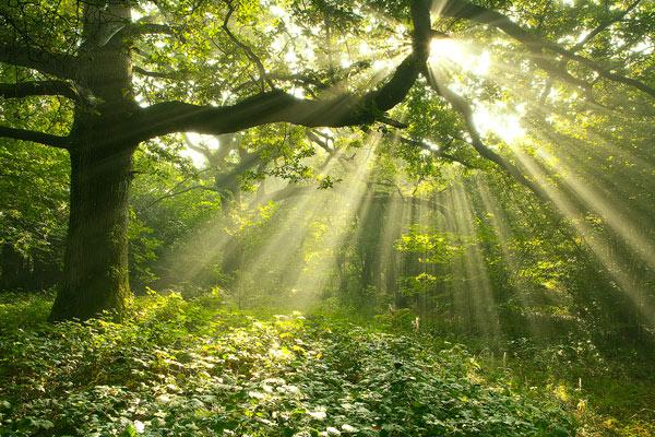Sunlight Shafts