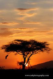 Samburu sunset