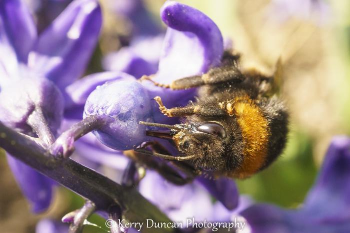 Eye Bee Collecting Nectar