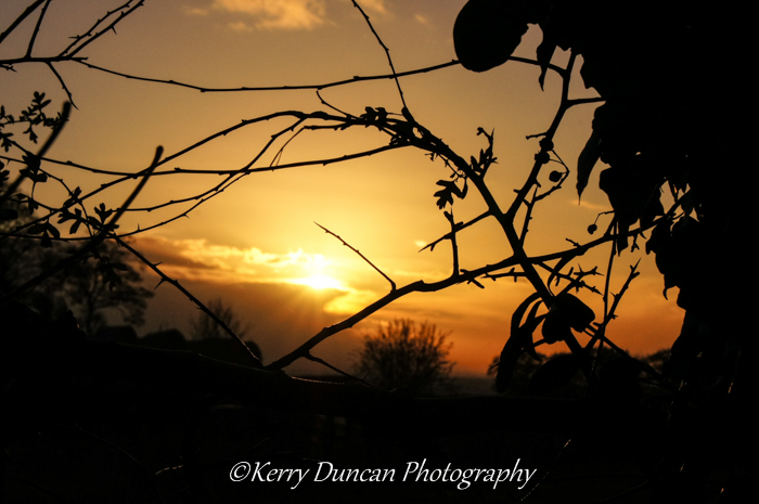 Hedgerow Sunset