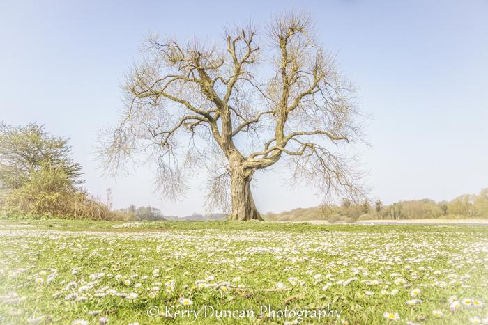 Daisy Tree