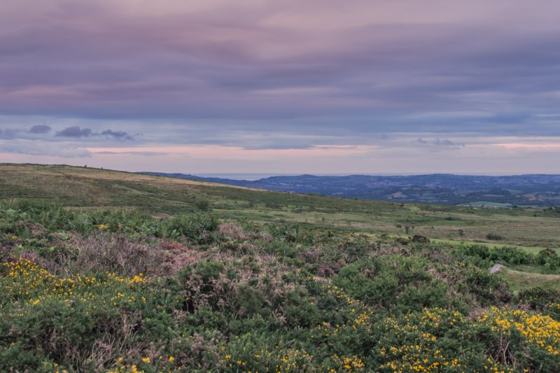 Dartmoor Veiw