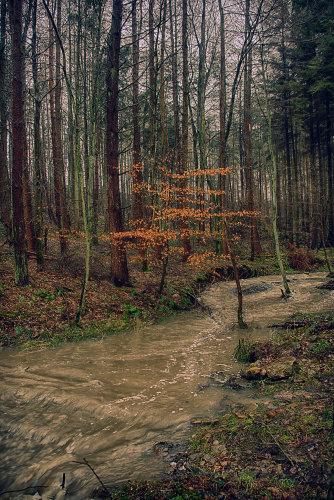 Flooded Stream