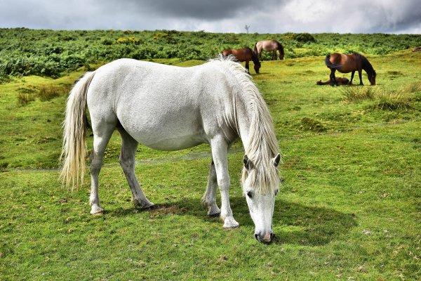 White Pony 1