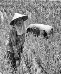 Rice Lady II BW