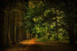 Blickling Woods 15