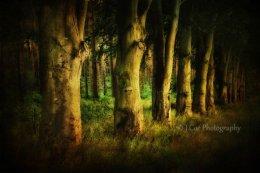 Creepy Woods 3