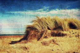 Holkham Dunes 3