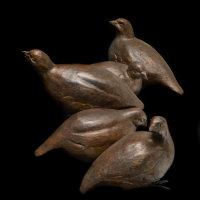 Covey of Partridges
