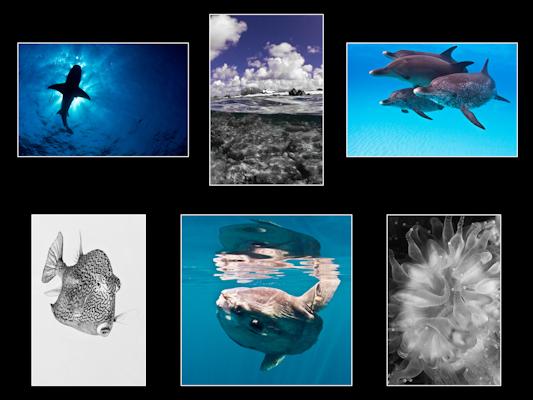 Portfolio in Monochromatics
