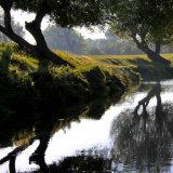 Beside Beverley Brook
