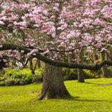 Blossom Divide