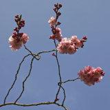 Blossom Lines