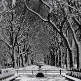Central Park Symmetry