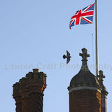 Hampton Court Flying
