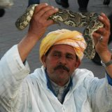Moroccan Pet?
