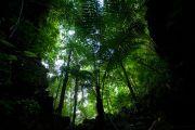 Krabi rainforest