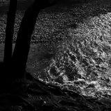 Tree, Lake, Light. Buttermere.