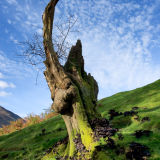 Dead tree and Mushrooms, Buttermere.