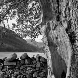 Tree and Stone Wall, Buttermere