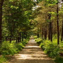 Forest road near Beaulieu