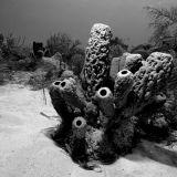 Sponger