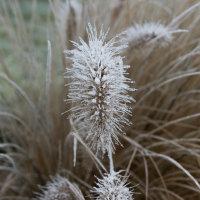 Winter Dec 2016 CPic-2