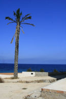 Palm Tree in the Med