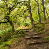 Woodland at Padley Gorge