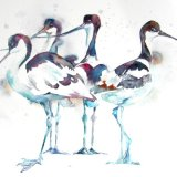 Avocets - do your own thing