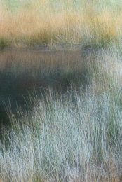 Sedges and Grasses