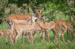 Impala Nursery Group