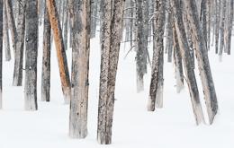 Tree Arrangement