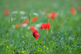 Wild Flower Meadow 2