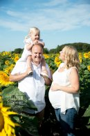 Family location shoot in the Sunflowers