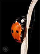 Ladybird on grass...'